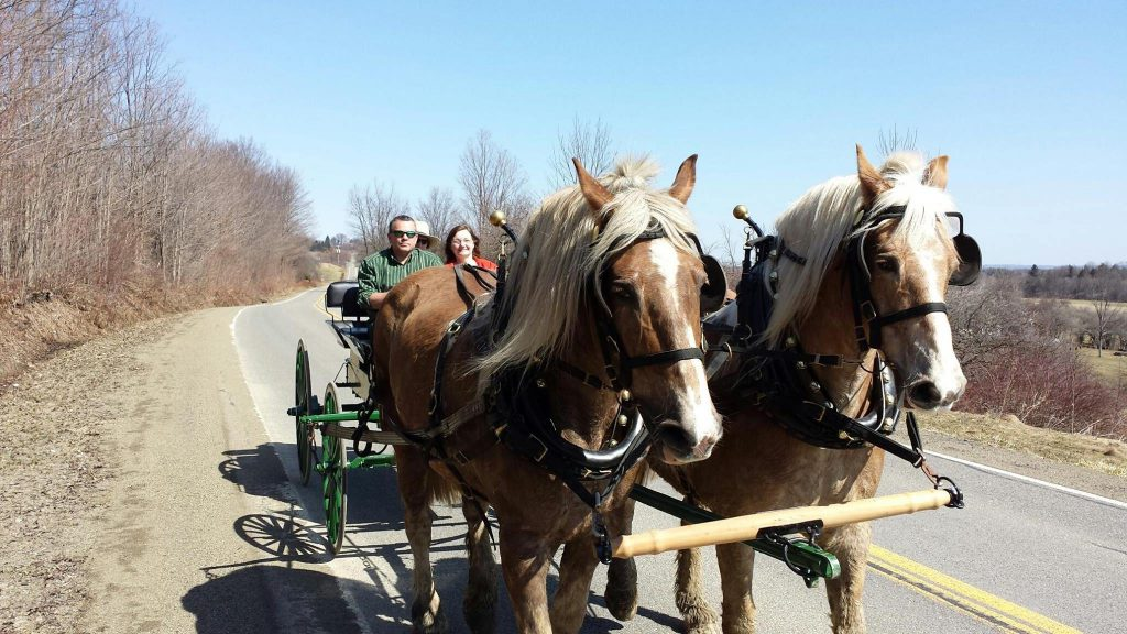 Boyd Family Ranch Carriage Ride