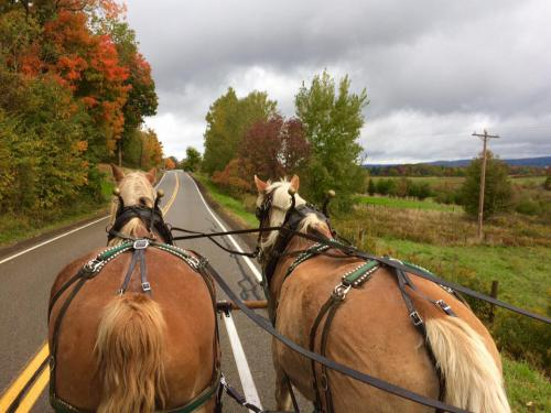 Horse Carriage Ride